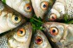 różne ryby